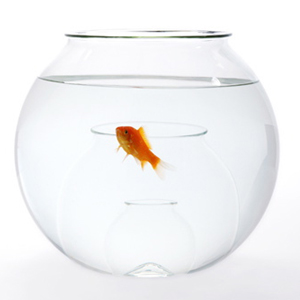 Methodology Fishbowl Facilitator Course CAPE TOWN